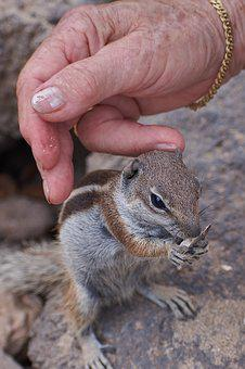 Gophers, Feed, Hand, Tame, Sweet, Curious, Wild, Eat