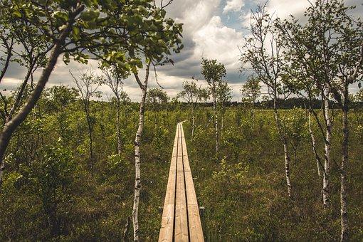 Tree, Wood, Nature, Landscape, Sky, Sweden, Landscapes