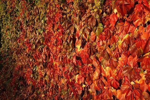 Leaf, Autumn, Background, Texture