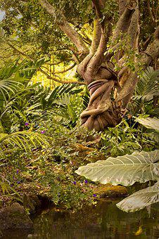 Jungle, Tree, Flora, Leaf, Bound, Growth, Tropical