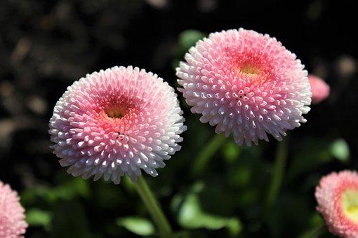 Flower, Nature, Plant, Petal, Summer, Leaf, Flowers