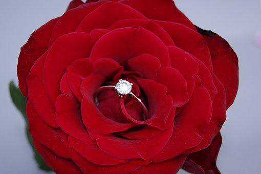 Flower, Rose, Petal, Love, Nature, Red, Red Rose, Ring