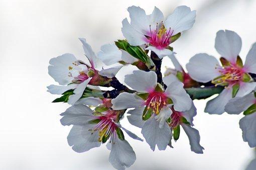 Flower, Nature, Plant, Branch, Nobody, Petal
