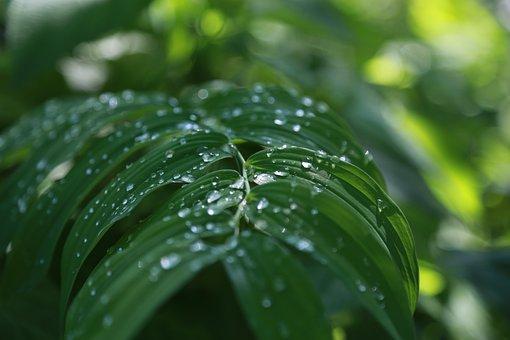 Noel Online Gift Shop, Leaf, Plants, Nature