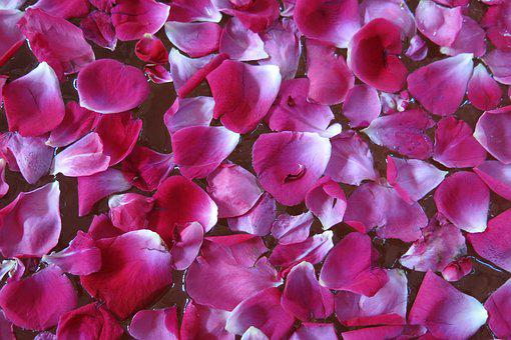 Flower, Nature, Flora, Petal, Rose Petals, Rose