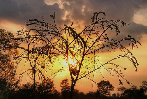 Blaze, Sunset, Silhouette, Dusk, Nature, Sky, Tree