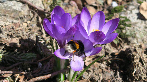 Nature, Spring, čmelak, Opilování, A Miracle Of Nature