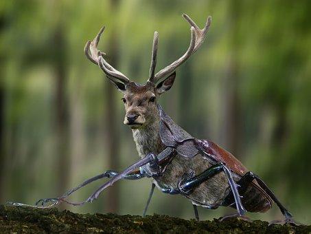 Digiart, Photoshop, Beetle, Stag Beetle, Animal World