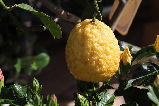 Leaf, Fruit, Mat, Nature, Plant, Healthy, Freshness