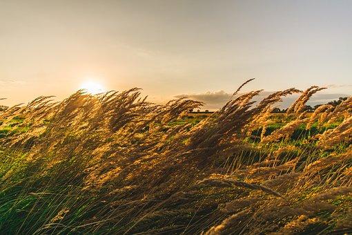 Nature, Sun, Rural, Summer, Grass, Schönwetter, Sky