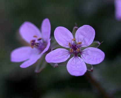 Flower, Wild, Pink, Tiny, Plant, Nature