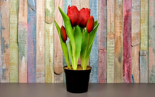 Tulips, Flowers, Artificial, Spring, Red