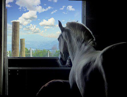 Horse, Boxing, Window, White, Shadow, Animal