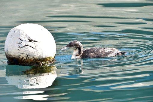 Waters, Natural, Wild Animals, Bird, Seabird