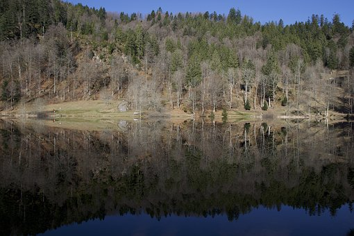 Mirroring, Nature, Wood, Landscape, Tree, Waters