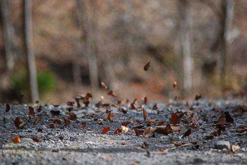 Nature, Wood, Tree, Autumn