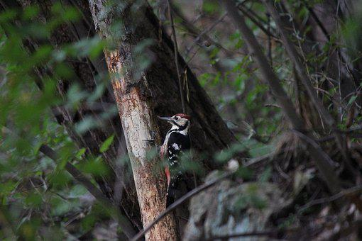 Wood, Nature, New, Outdoors, Woodpecker, Mountain