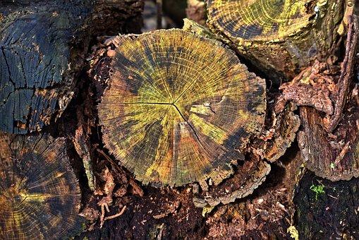 Wood, Log, Cut, Year Rings, Grain, Pattern, Bark