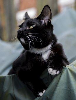 Portrait, Cat, Mammals, Animals, Pets, Sit, Kitten