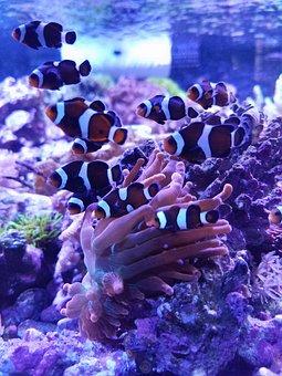 Underwater, Coral, Ocean, Marine, Reef, Aquarium