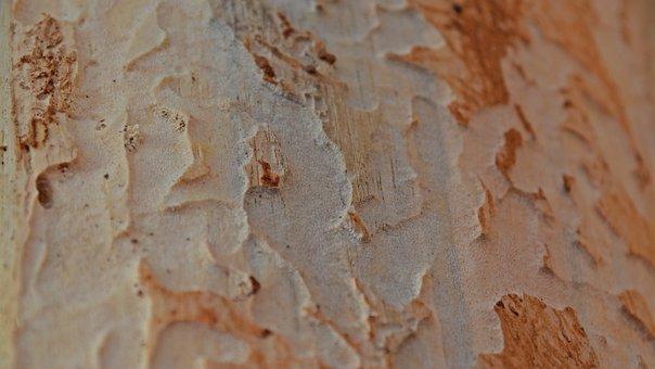 Background, Texture, Pattern, Rau, Wood, Wood Worm