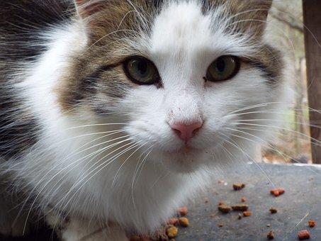 Cat, Animal, Cute, Pet, Kitten, Fur, Young, Lovable