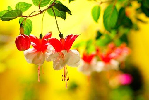 Nature, Leaf, Flora, Garden, Flower, Summer, Color