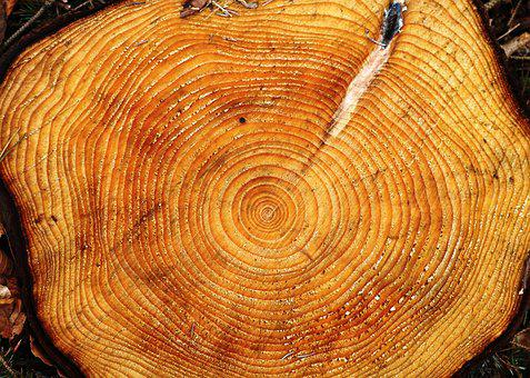 Tree, Ring, Age, Growth, Concentric, Log