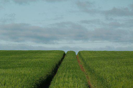 Agriculture, Field, Landscape, Farm, Grass, Land