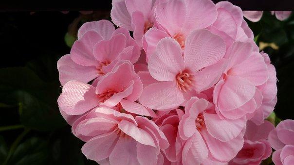 Flower, Flower Ball, Pink