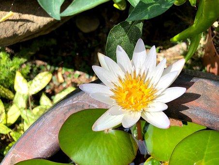 Nature, Plant, Foliage, Flower