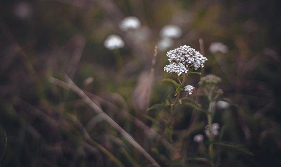 Nature, Outdoors, Flower, Plant, Grass, Sheet
