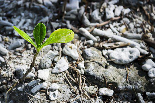 Soil, Nature, Ground, Environment, Little, Leaf