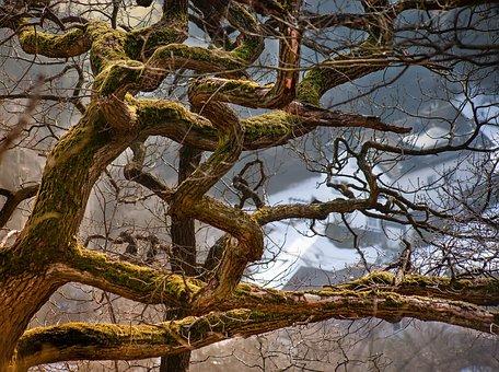 Tree, Nature, Landscape, Wood, Lichtspiel, Sunbeam