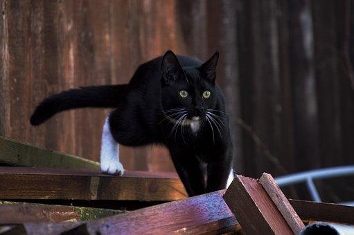 Cat, Portrait, Animals, Mammals, Looking For, Pets