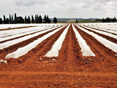 Agro-industry, Earth, Field, No Person, Outdoor, Melon