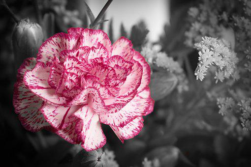 Flower, Nature, Plant, Floral, Ornament, Rosa, Color