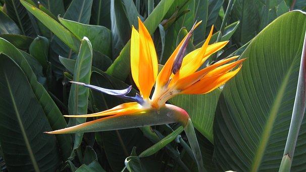 Nature, Flora, Leaf, Flower, Tropical, Orange