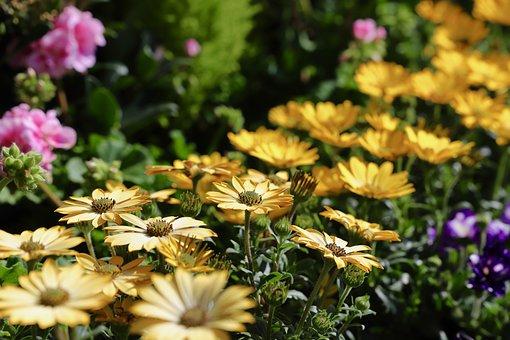 Flower, Plant, Nature, Garden, Summer, Petal, Floral