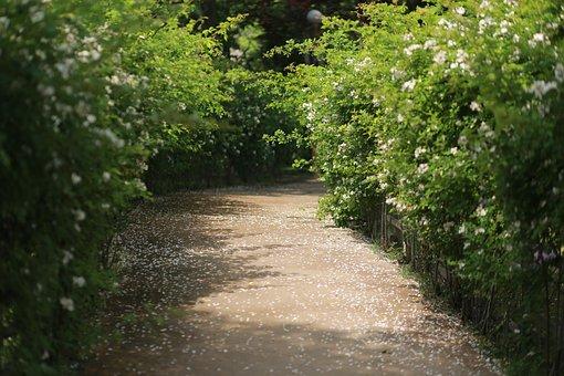 Noel Online Gift Shop, Nature, Wood, Leaf, Park, Spring