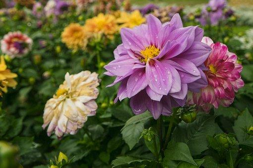Flower, Nature, Plant, Garden, Summer, Petal, Leaf