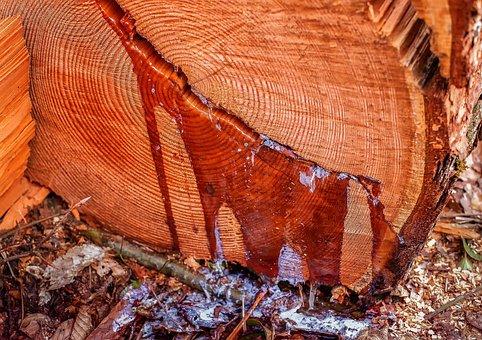 Resin, Bitumen, Vaginal Discharge, Resins, Wood, Nature