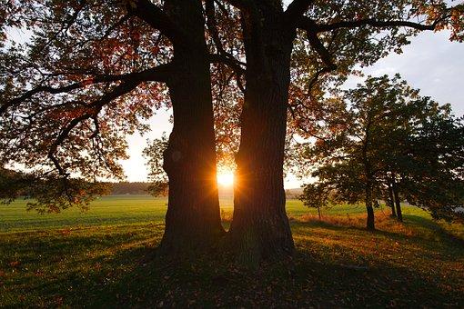 Tree, Park, Nature, Autumn, Sun, Landscape, Schönwetter