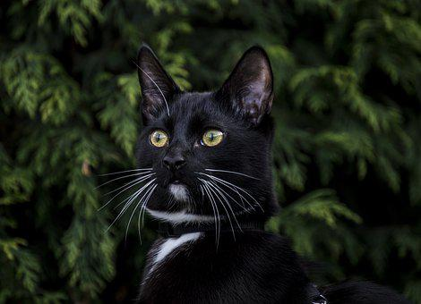 Cat, Animals, Nature, Portrait, Mammals, Pets, Fur, Sit