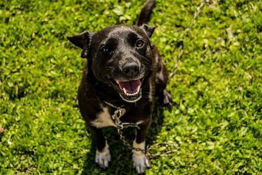 Dog, The Language Of The, Black, Grass, Ear, Animal