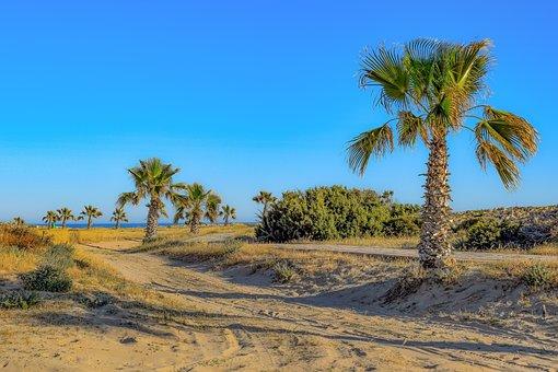 Palm Trees, Nature, Sand, Travel, Landscape