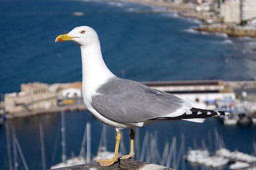 Seagull, Gull, Water, Sea, Nature, Outdoors, Bird