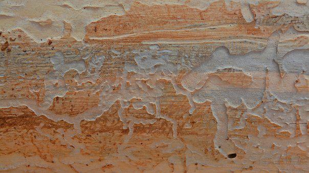 Background, Pattern, Texture, Wood, Wood Worm