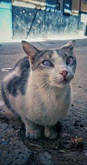 Animal, Nature, Mammal, Cute, Cat, Kitten, Young Cat