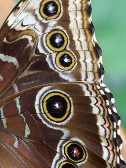 Butterfly, Noctuinae Stubs, Wing, Insect, Animal